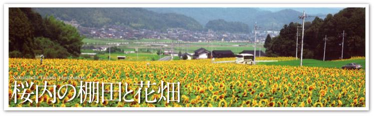 桜内の棚田と花畑