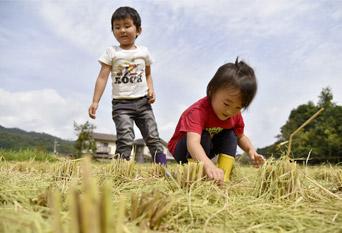 稲刈り後の田で遊ぶ子供