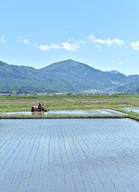 水田とトラクター