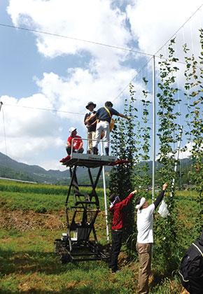 高所作業車でのホップ収穫作業